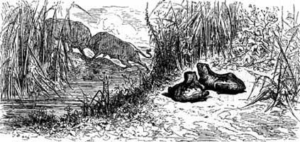 Два Быка и Лягушка (Г. Доре)