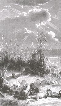 Солнце и Лягушки (Е. Ламберт)