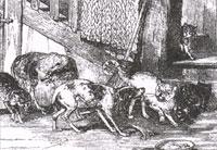 Ссора Собак с Кошками и Кошек с Мышами (Ж. Давид)