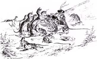 Война Крыс и Ласок (Вимар)