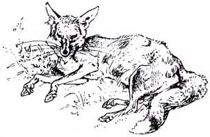 Лев, Волк и Лиса (Вимар)