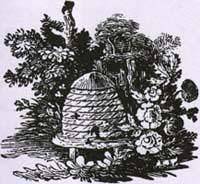 Шершни и Пчёлы