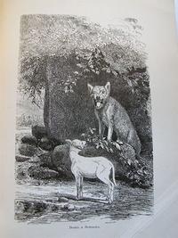 Басня Волк и Ягнёнок (Лафонтен )