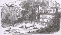 Ласточка и Птички (К. Жирарде)