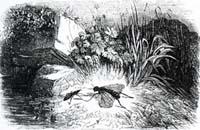 Муха и Пчела (Ж. Давид)