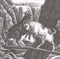 Две Козы (Рисунок XIX в.)