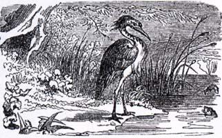 Цапля (К. Жирарде)