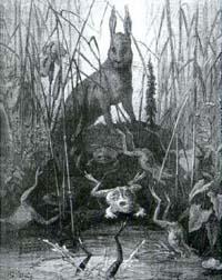 Заяц и Лягушки (Г. Доре)