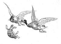 Черепаха и две Утки (де Вимар)