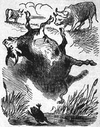 Два Быка и Лягушка (Ное)