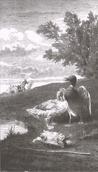 Черепаха и две Утки (Е. Ламберт)