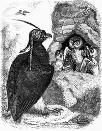 Орел и Сова (Гранвиль)