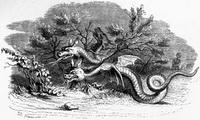 Стоглавый и стохвостый Драконы (Гранвиль)