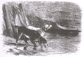 Собаки и ослиная Туша (Ж. Давид)