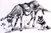 Осел и Собака