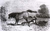 Волк и Конь (Ж. Давид)