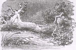 Дуб и Трость (К. Жирарде)