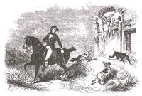 Английская Лисица (Ж. Давид)