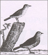 Птицы (Неизвестный художник)