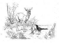 Ворон, Газель, Черепаха и Крыса (де Вимар)