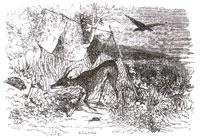Ворон, Газель, Черепаха и Крыса (Ж. Давид)