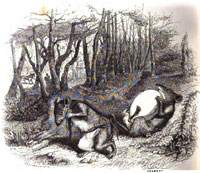 Две Крысы, Яйцо и Лиса (Гранвиль)